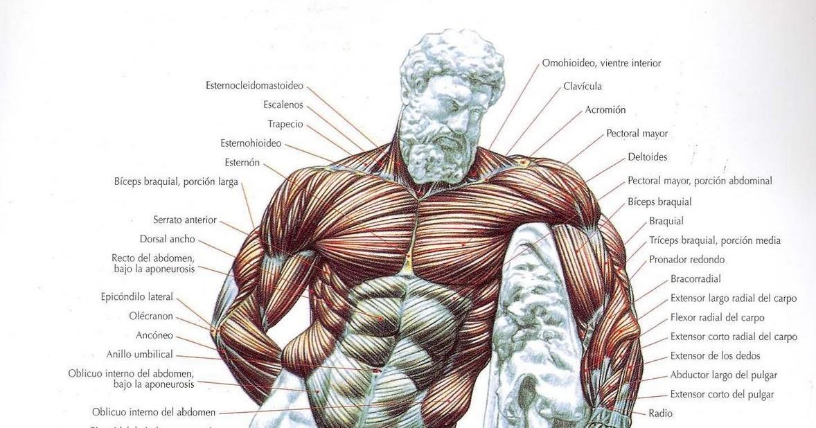 ANATOMIA HUMANA: Generalidades del sistema oseo.