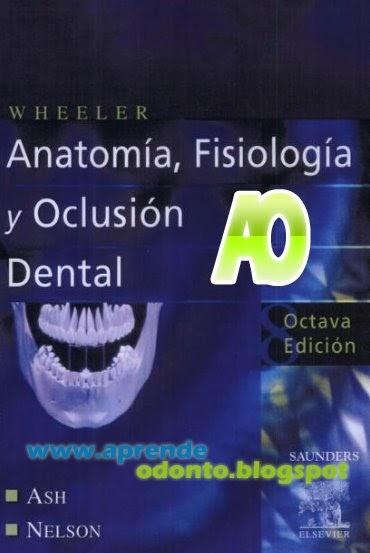 Sitio de Odontologia: anatomia dental, Fisiologia y Oclusion