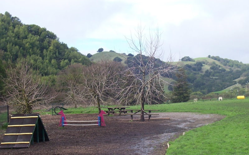 agility equipment flanked by trees on one side and green grass on the other