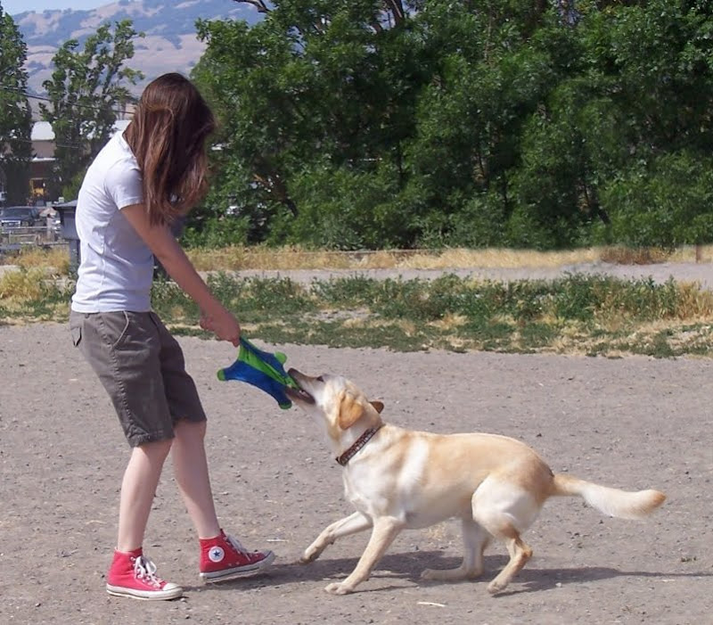 my older daughter playing tug with cabana at dog park, wind is blowing my daughter's hair over her face completely
