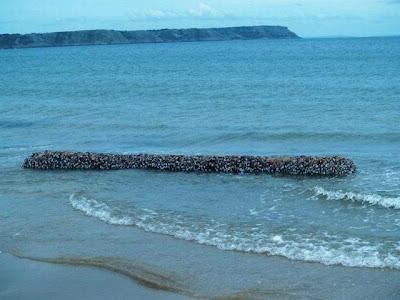 gallerydunia.com: Hewan laut yang aneh dan langka