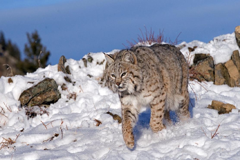 poderosos animales en la nieve