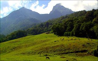 Sweet Georgia Landscape