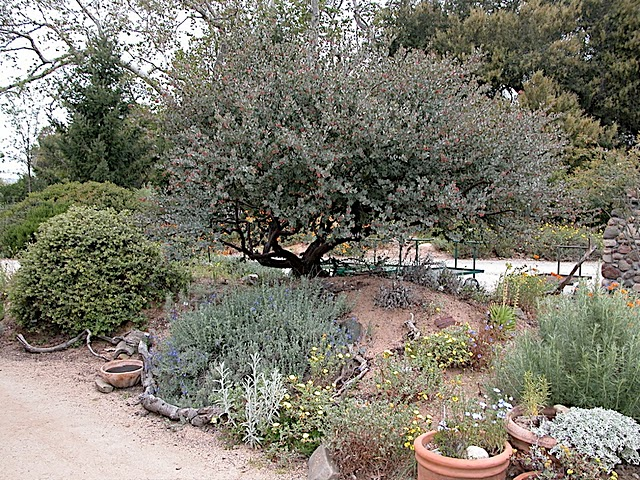 San Juan Capistrano Nothing Is Worse Than Planning Your Native Garden Only To Find That Local Nursery Doesn T Carry The Plants You Need Or