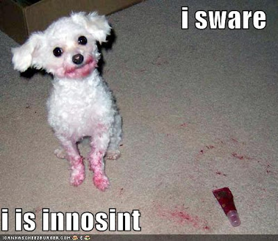 http://4.bp.blogspot.com/_Lyf8Uc4DZqo/R544ntuJsrI/AAAAAAAAAA8/mOPPoLh06Ps/s400/loldog-funny-pictures-innocent-dog.jpg