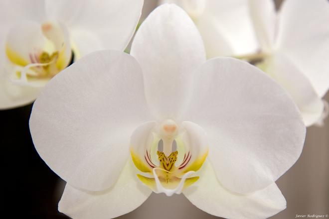 74 Una flor