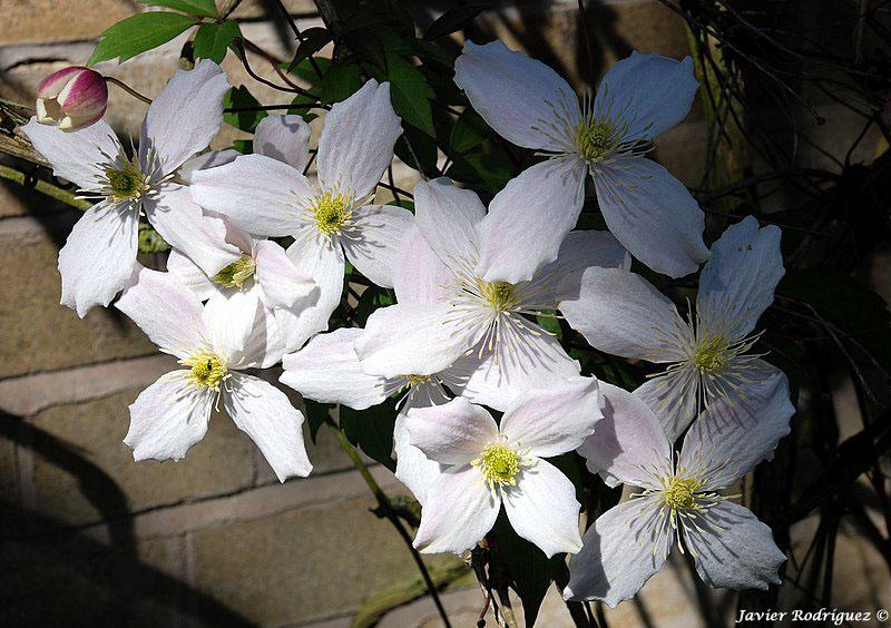 51 Flores para ti
