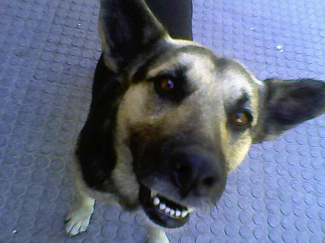 Un Amigo Perro
