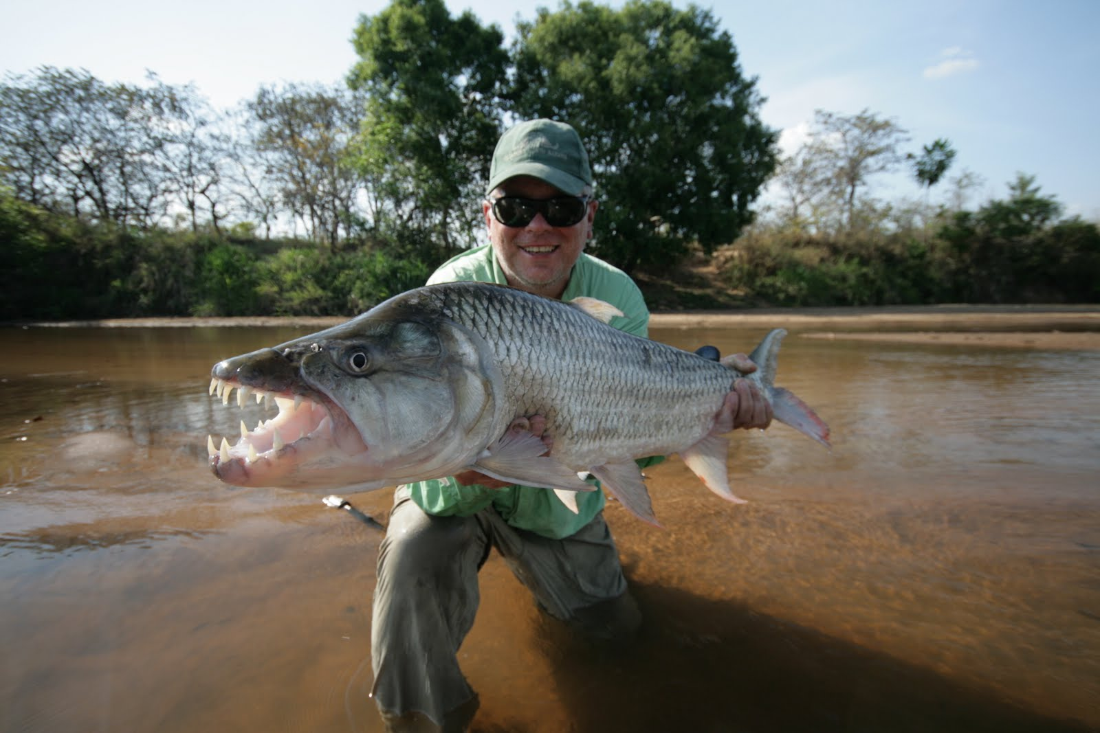 Nov 6 2010 fishing the americas a sportfishing journal for Tiger fish pictures