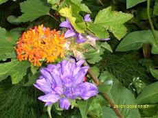 Muista tarvittaessa kysyä kotitalousapua puutarhaasi