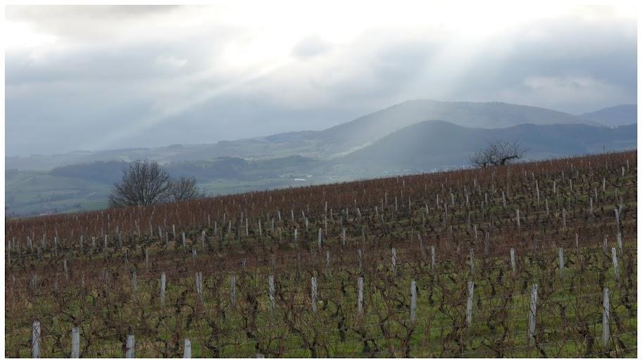 vigne et monts