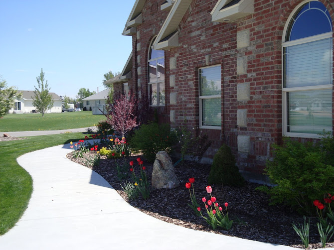 Spring Flowers in the Front