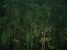 Selva, cerca de aqui