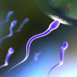 http://4.bp.blogspot.com/_M6zlxSoctOE/SlVzEevz60I/AAAAAAAAARM/t_x44ZnfWjg/s400/sperma_buatan.jpg