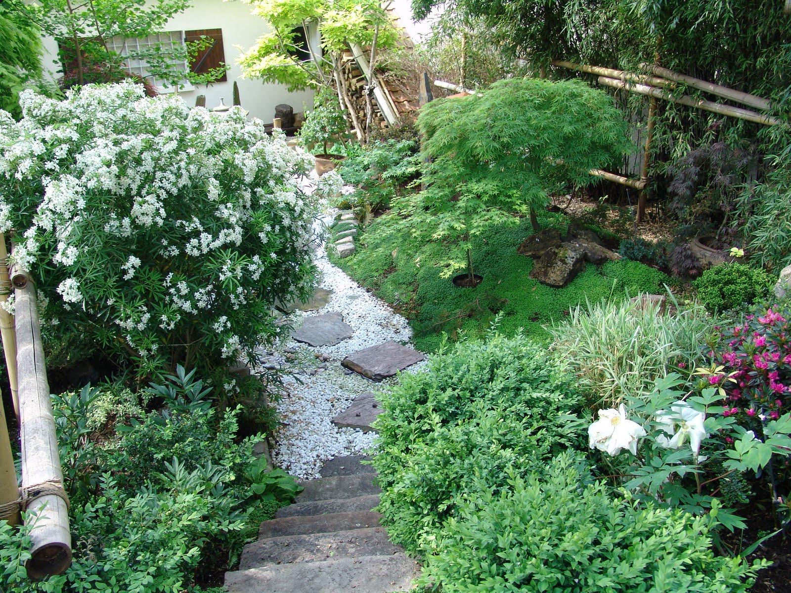 Evolution du jardin japonais juillet 2010 for Plan jardin japonais