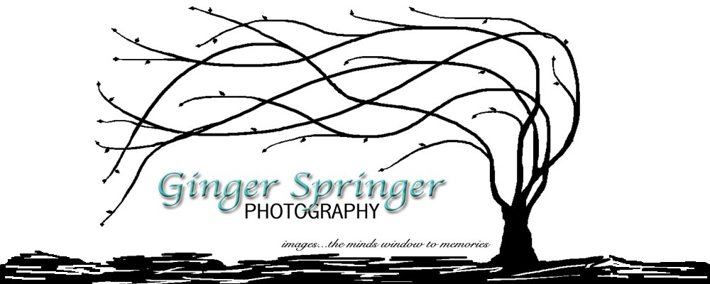 Ginger Springer Photography