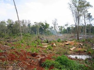 deforestation global issue