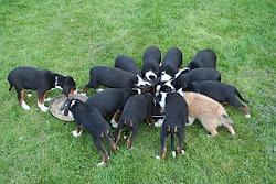 Vilka hundfoder hittar du hos oss?