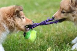 Hos oss hittar du hundens favorit leksak