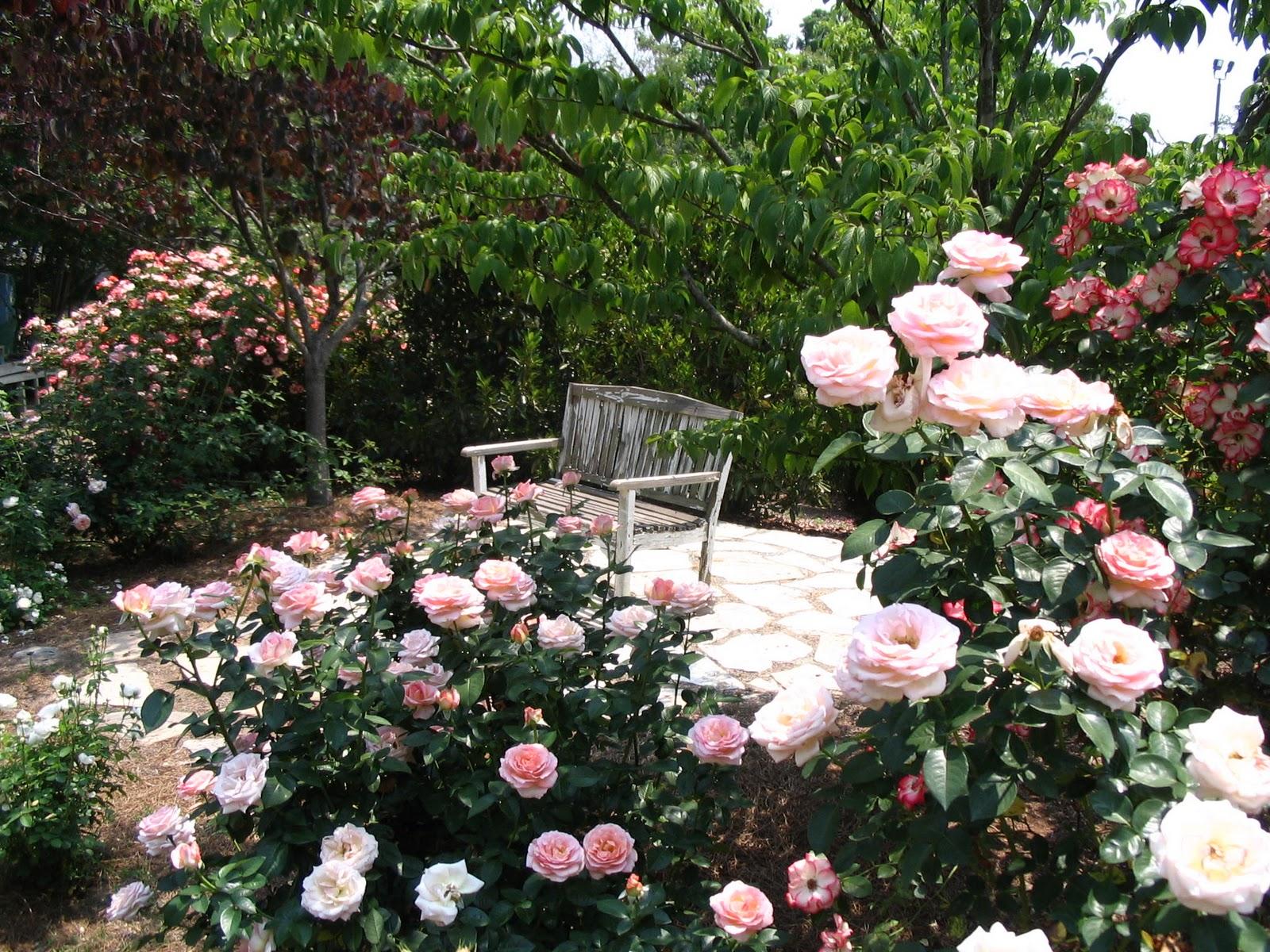 DO Details McGill Rose Garden And Nectar