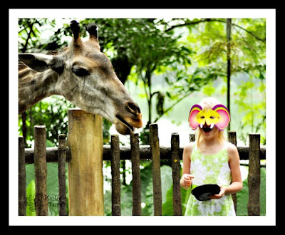 justaclickin 39 singapore zoo night safari. Black Bedroom Furniture Sets. Home Design Ideas
