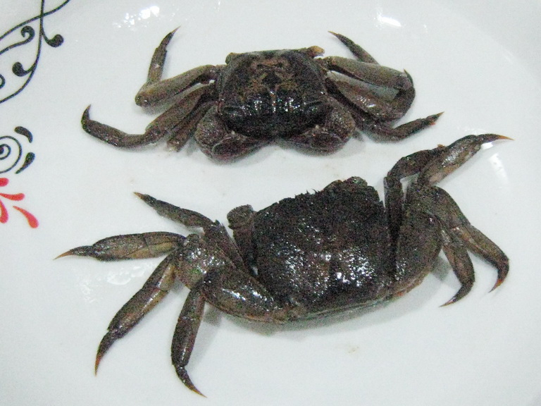 Ceramic Paint Coating Knoxville >> Top 28+ - What Do Crabs Eat - what do hermit crabs like to eat, what do sand crabs eat ehow ...