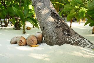 Bröllopsresa till Seychellerna