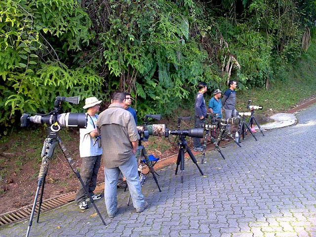 Photographers waiting for bird