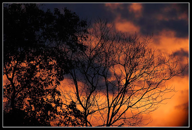 Senja- Sunset