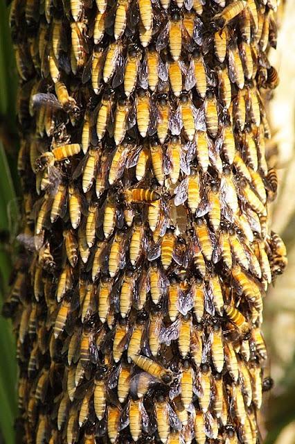 Bee Colony