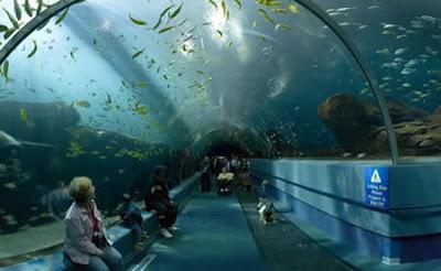 7 Breathtaking Aquariums Around The World B Splendid