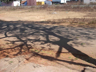 Shadow of a Neem Tree