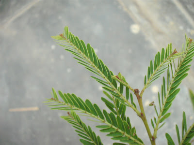 Top View of Leaves