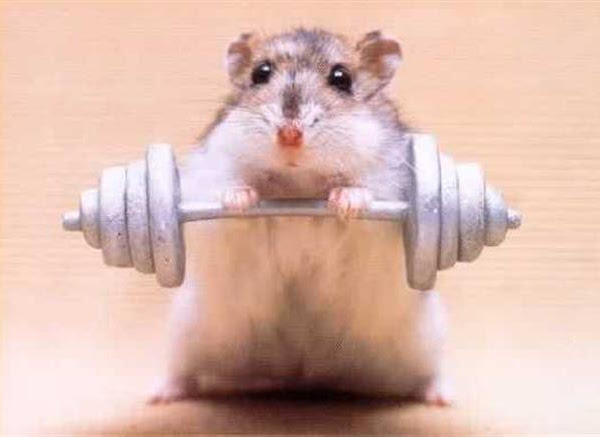 Gym hamsters and novel ideas
