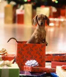 Mall madness and a christmas wishlist