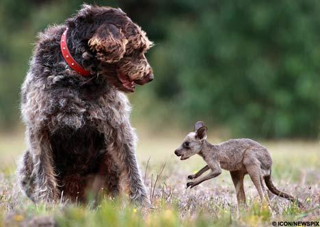 [dog-kangaroo2.jpg]