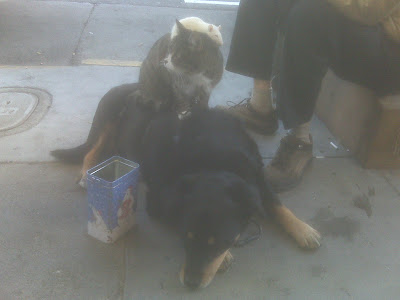 Cat Rat Dog San Francisco