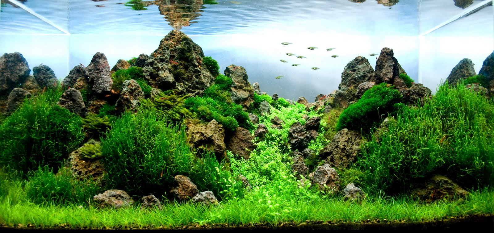 Manage your freshwater aquarium tropical fishes and for Plante aquarium