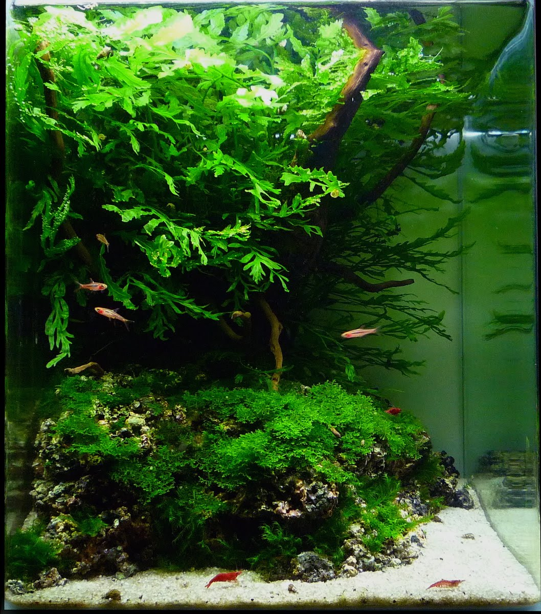 ... plants: Aquatic Scapers Europe - International Aquascaping Contest