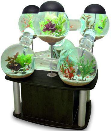 labyrinth-aquarium Memilih Mini Aquarium untuk Ikan Hias Kecil  wallpaper