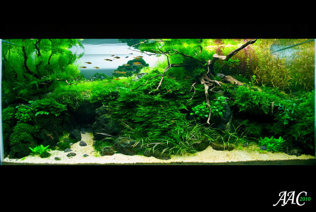 freshwater aquarium, tropical fishes and plants: Acuavida Aquascaping ...