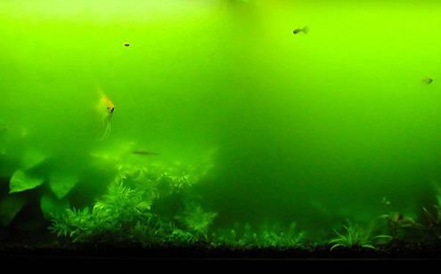 http://4.bp.blogspot.com/_MOTNQWz_Hf0/TJX2ibRPjiI/AAAAAAAAAQo/2MILzfkXtkc/s1600/greenwater.jpg