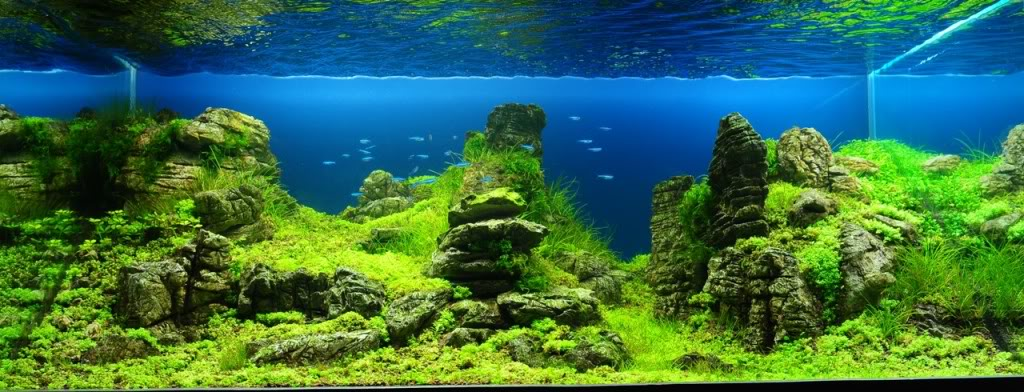 ... , tropical fishes and plants: Aquascaping Contest 2010 in Vietnam