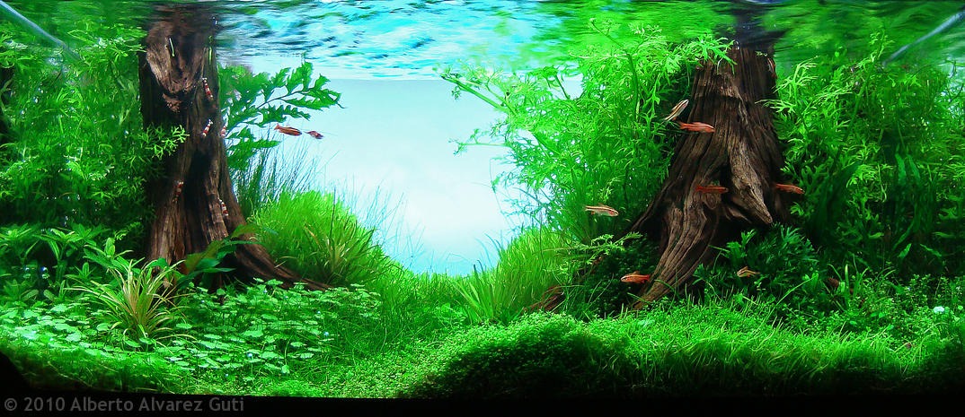 Manage your freshwater aquarium tropical fishes and for Freshwater pond plants