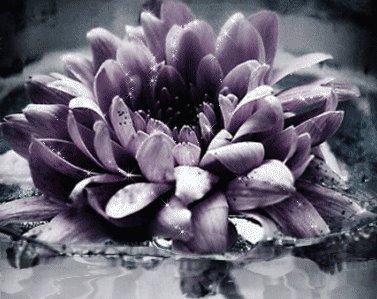 [flor!!!!!!!!!!!!!!!!!!!!!!!!!]