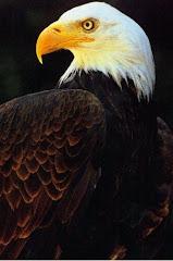 The Eagle