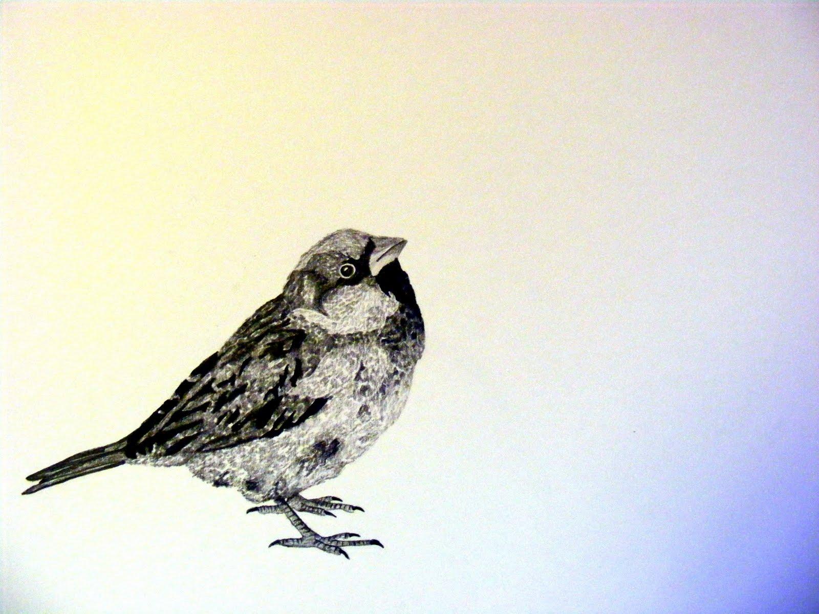 Three Little Birds Drawing Bird 1.jpg