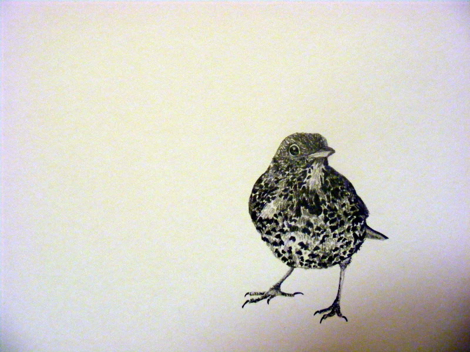 Three Little Birds Drawing Bird 3.jpg