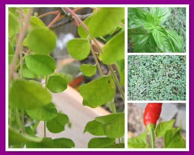 An Indian Eggplant Recipe Baingan Ka Bharta & Tuesday Tune, Natasha in Oz