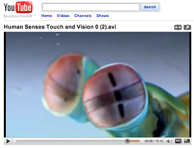 Mantis shrimp eyes